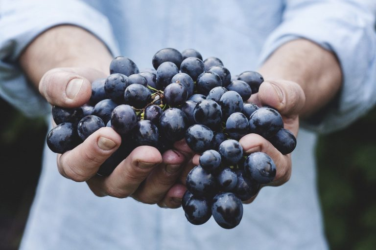 Frutas que aumentam a imunidade