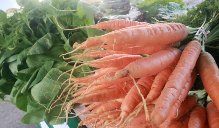 Feira Agroecológica estará de volta no RioMar