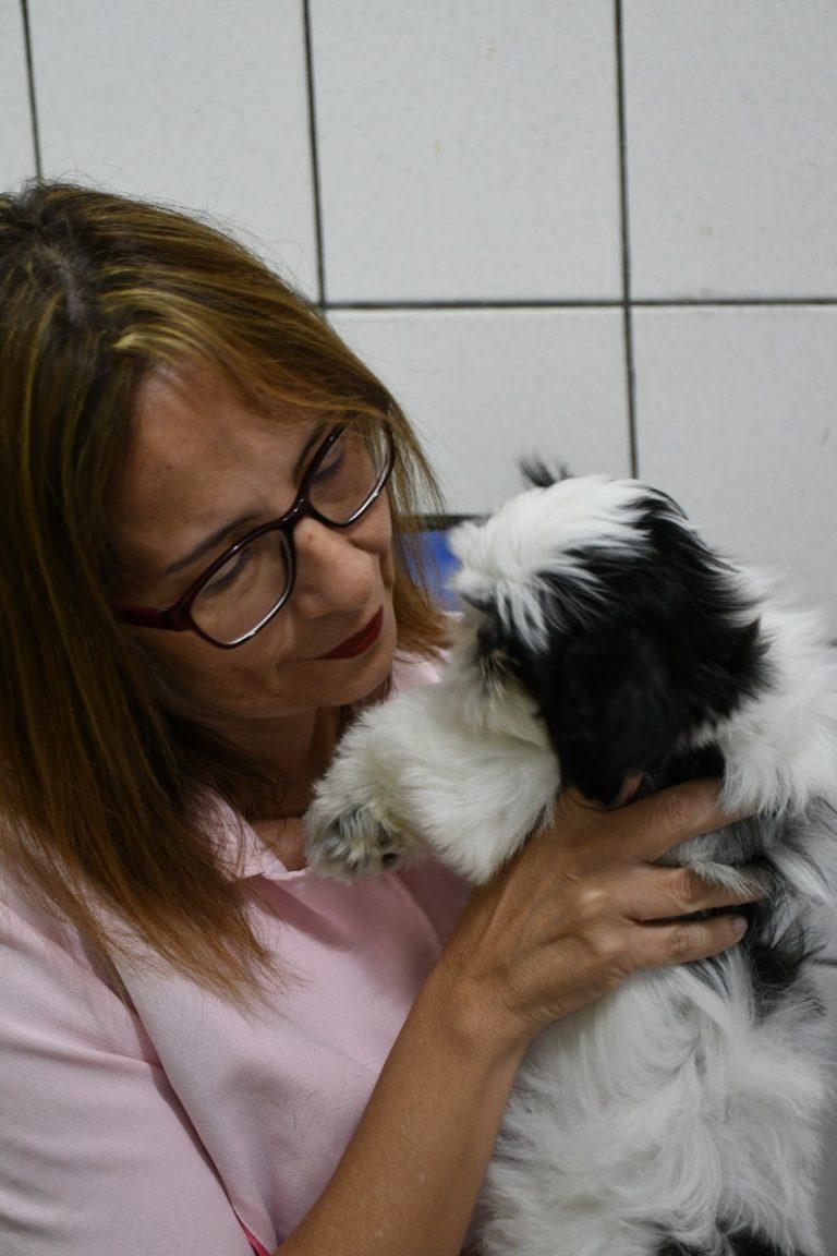 Novembro azul: cachorros também podem ter câncer de próstata