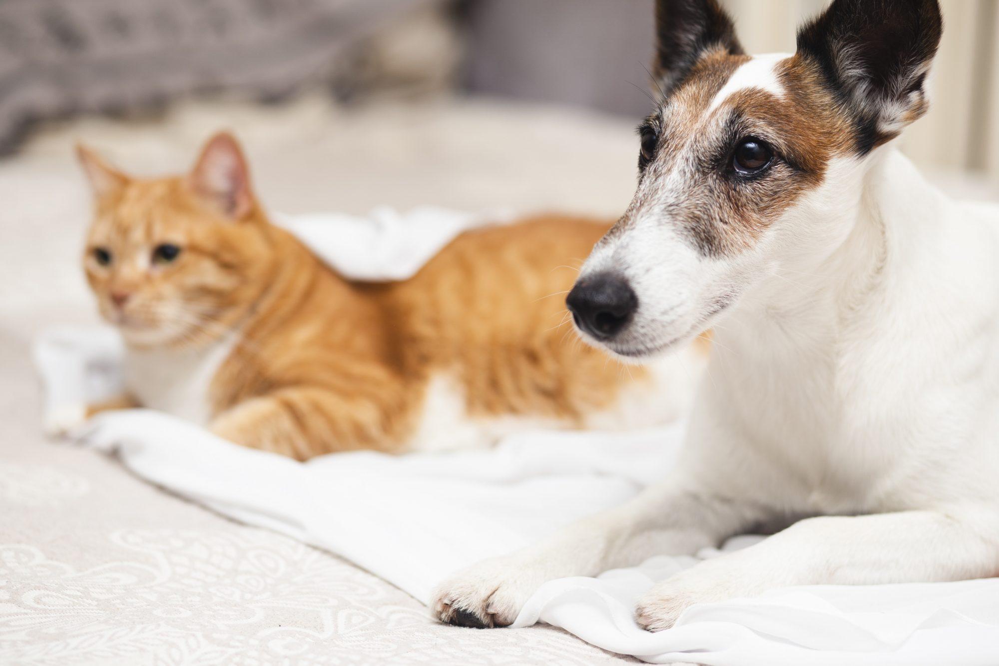 Brilux lança eliminador de odor para pets