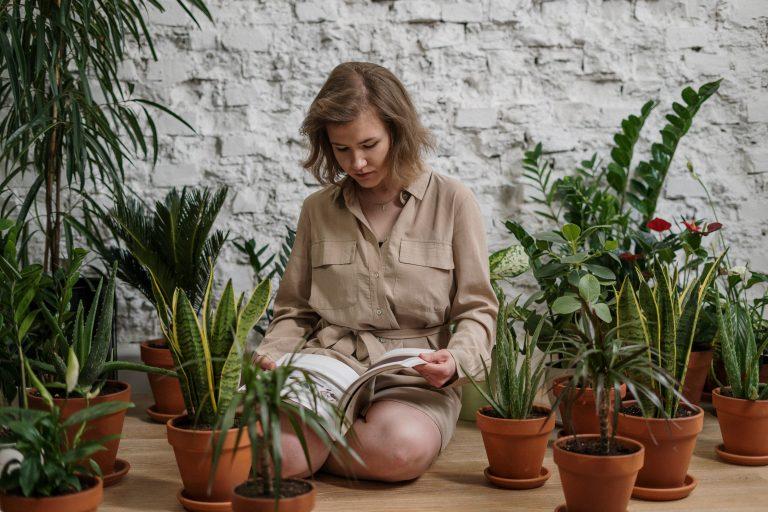 Jardinagem traz benefícios para dentro de casa