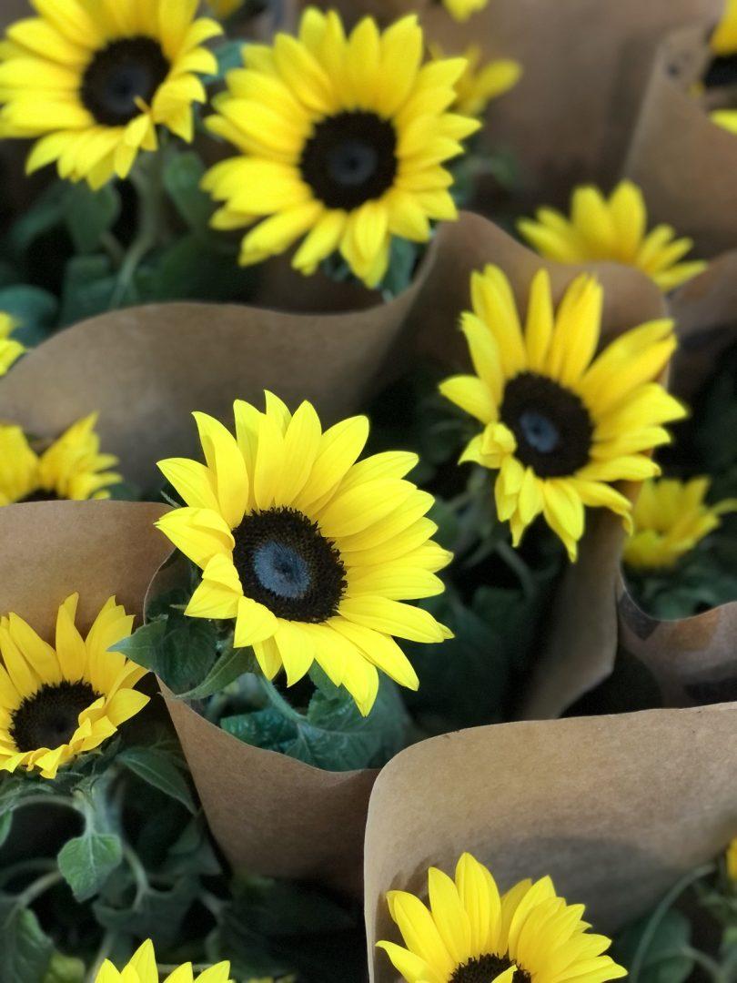 Shopping Tacaruna recebe feira de flores e livros