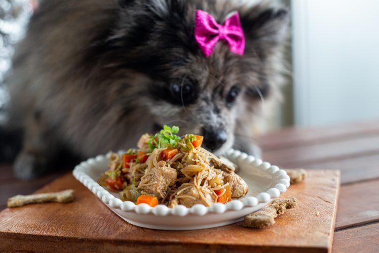 Comida saudável para pets: Chef Rapha Vasconcellos lança refeições gourmets, hambúrgueres e lancheiras térmicas para pets